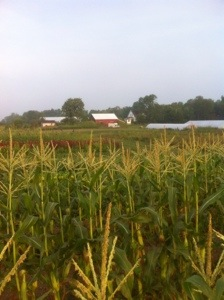 View of the farm in summer