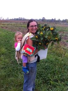 Final bucket of sunflowers