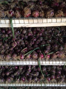 Red onions drying