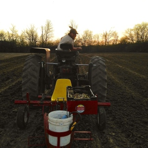 Racing against the setting sun to get potatoes planted