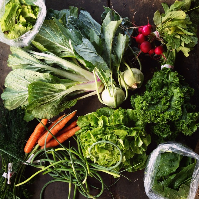 spring boxes feature greens and fast growing roots