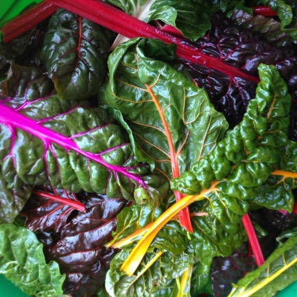 Since swiss chard is in the same family as spinach, we encourage people to use it in place of spinach.